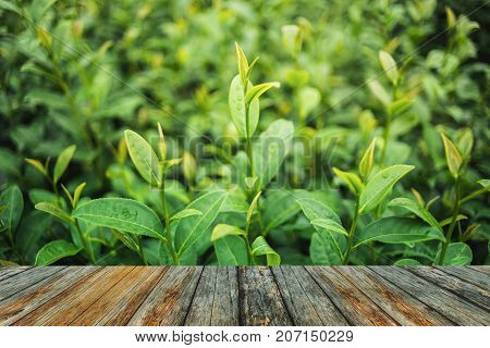 wooden floor in front of green tea and fresh leaves