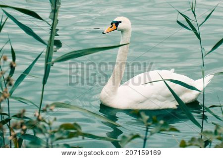 cute white bird with orange beak floating in beautiful blue water