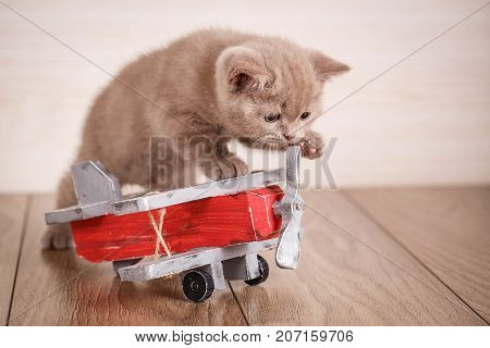 Home, peace, love concept - kitty near the toy plane. Young cat pilot.