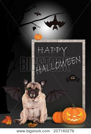 pug dog dressed up as bat with pumpkins and blackboard sign with text happy halloween on scary background