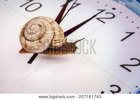 a grape snail on an desktop clock, close up view