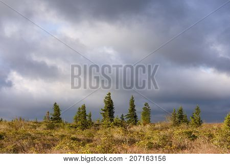 Storm Clouds over Field with Pine Trees