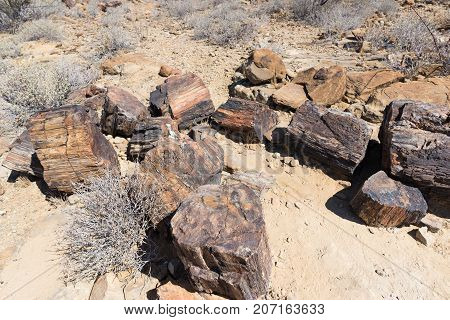Petrified And Mineralized Tree Trunk In The Famous Petrified Forest National Park At Khorixas, Namib