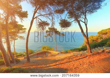 Sunny morning on spanish costa dorada beach. South pine trees on sea background. Nature of coastline of Salou resort.
