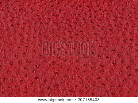 full frame abstract red ostrich leather surface