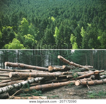 Environment, Nature And Deforestation Forest - Felling Of Trees In The Forest