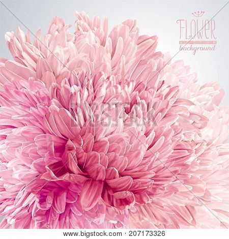 Modern floral vector art - luxurious pink red and white Asters and Chrysanthemums arrangement for wedding Valentine's Day Mother's Day sales and other events