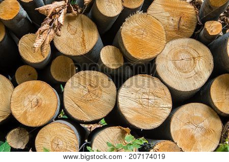 Pile of wood logs storage for industry. Wooden natural cut logs
