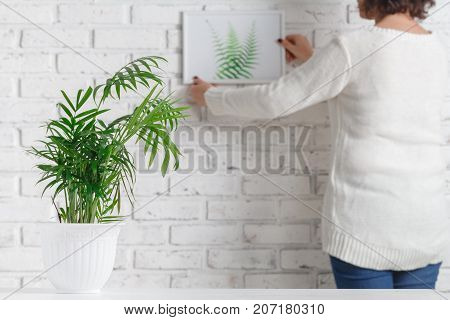 Woman's Hand Is Holding Photo Frame And Concrete Pot With Home Plant.
