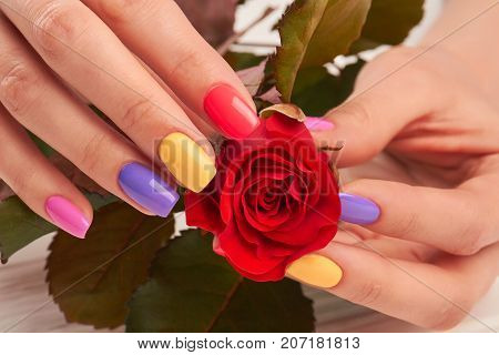 Close up of manicured hands with rose. Female hands with colorful manicure holding gentle red rose close up. Pastel summer manicure.