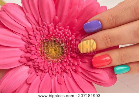Close up of gerbera and manicured fingers. Detail of pink gerbera flower and female fingers with multicolored nail polish. Nail treatment and spa.
