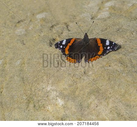 close up red admiral butterfly sitting on sandstone background