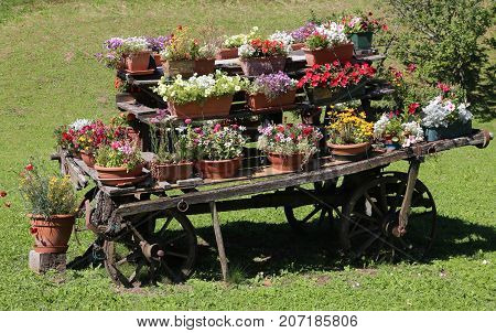 Wooden Chariot With Flower Pots In The Garden