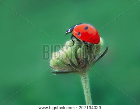 ladybug in the beautifull nature green flower