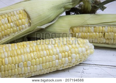 Fresh Ears Of Corn