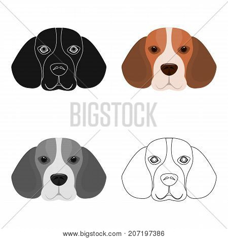 Breed dog beagle..Muzzle beagle single icon in cartoon style vector symbol stock illustration .
