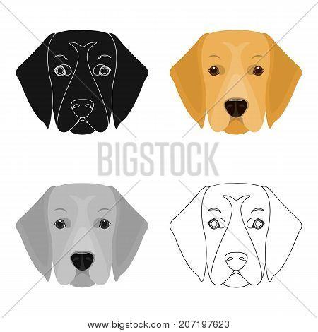A dog breed, a golden retriever.Muzzle of the Golden Retriever single icon in cartoon style vector symbol stock illustration .