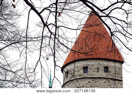 Tower of the European city - old town - Tallinn - landscape of the gray tower Tower Levenshede