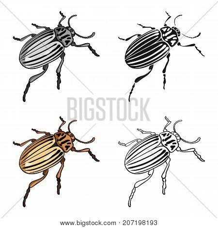 Colorado beetle, a coleopterous insect.Colorado, a harmful insect single icon in cartoon style vector symbol stock isometric illustration .