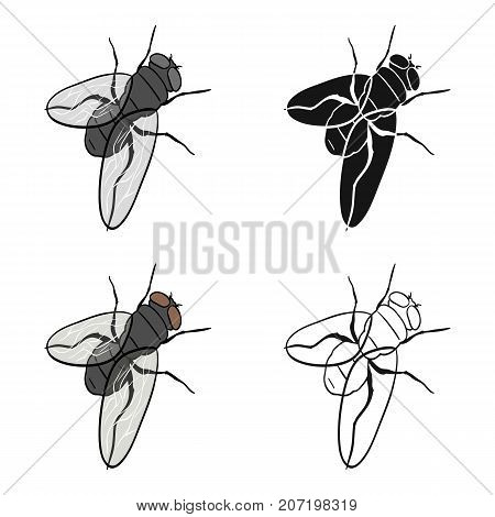 The fly is ordinary.Dipterous insect fly single icon in cartoon style vector symbol stock isometric illustration .