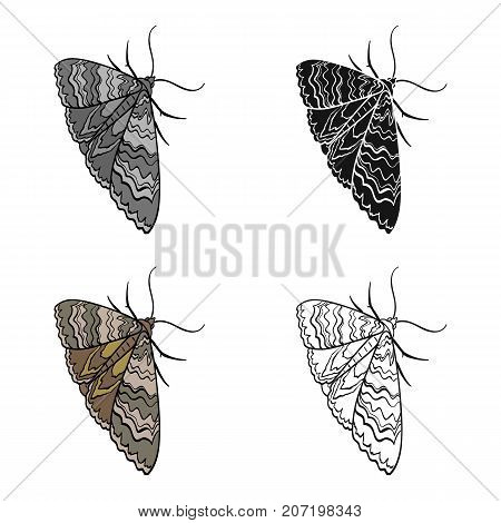 Moth, night butterfly. Insect pest moth single icon in cartoon style vector symbol stock isometric illustration .