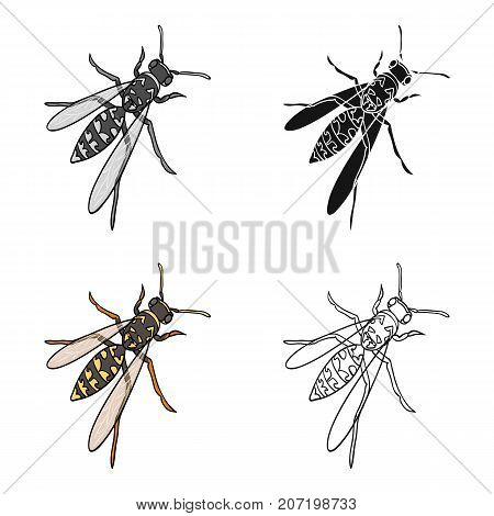 Wasp, hymenopteran insect.Wasp, stinging insect single icon in cartoon style vector symbol stock isometric illustration .