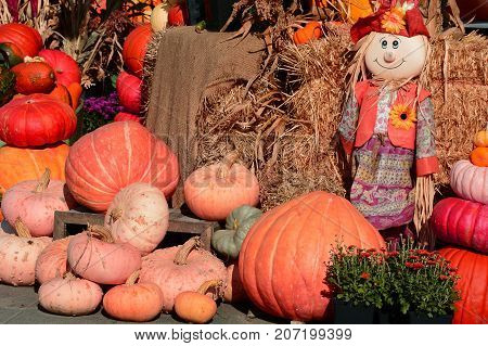 A pumpkin display with a raggedy Anne doll set up at the farmers market during Thanksgiving.