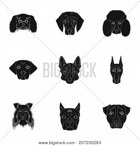 Doberman, Dalmatian, Dachshund, Spitz, Stafford and other breeds of dogs.Muzzle of the breed of dogs set collection icons in black style vector symbol stock illustration .