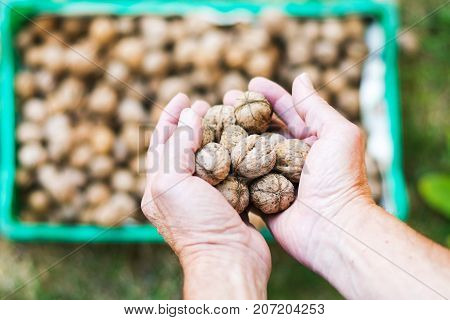Man Adding Walnuts Into The Basket