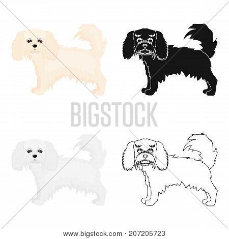 Spaniel, single icon in cartoon style.Spaniel vector symbol stock illustration .
