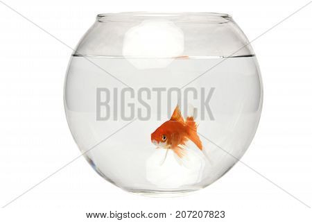 goldfish and water pic with white background