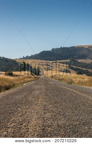 Dried Grasses Flank Gravel Road in California foothills