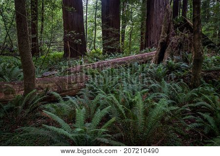 Fallen Tree Trunk In Forest