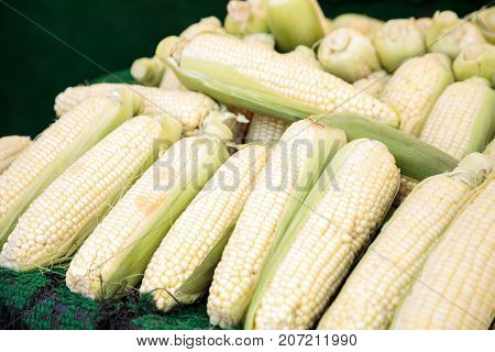 Yellow Sweet Corn Ears Shucked