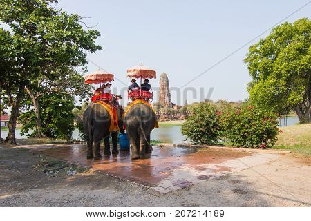 Ayutthaya Thailand  April 15, 2016 : Riding an elephant The elephant is the dominant activity of the main attractions -  Ayutthaya historical park And a World Heritage Area
