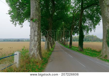 Countryside Road In Burgundy