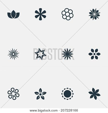 Elements Floral, Daphne, Decoration And Other Synonyms Daisy, Victoria And Floret.  Vector Illustration Set Of Simple  Icons.