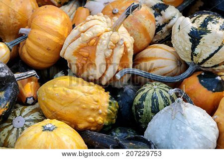 Assortment of Gourd on display in Northern California Pumpkin Patch.