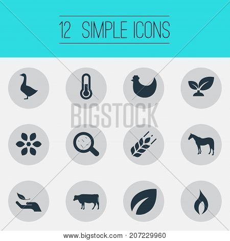 Elements Zebra, Grain, Leaf And Other Synonyms Harvest, Bacteria And Germs.  Vector Illustration Set Of Simple Energy Icons.