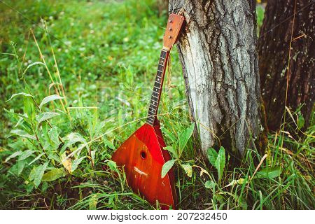balalaika is in the forest near the tree