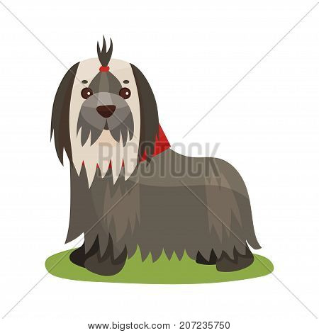 Yorkshire terrier dog, purebred pet animal standing on green grass colorful vector Illustration on a white background