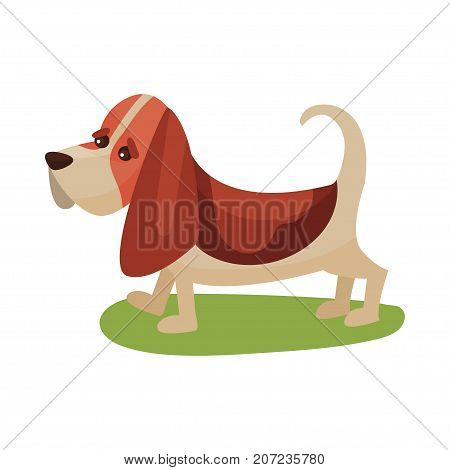 Basset haund dog, purebred pet animal standing on green grass colorful vector Illustration on a white background