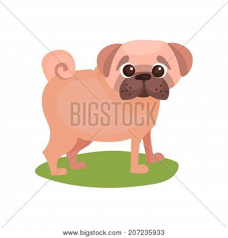 Pug dog, purebred pet animal standing on green grass colorful vector Illustration on a white background