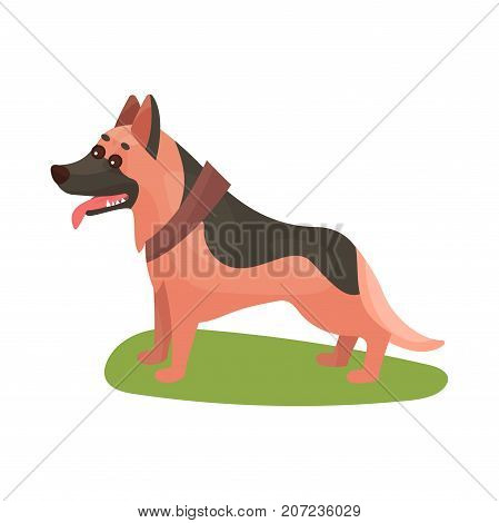 German shepherd dog, purebred pet animal standing on green grass colorful vector Illustration on a white background