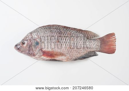 Full body shot of Tilapia (Tilapia Nilotica) on white background in studio. Organic food and eating concept
