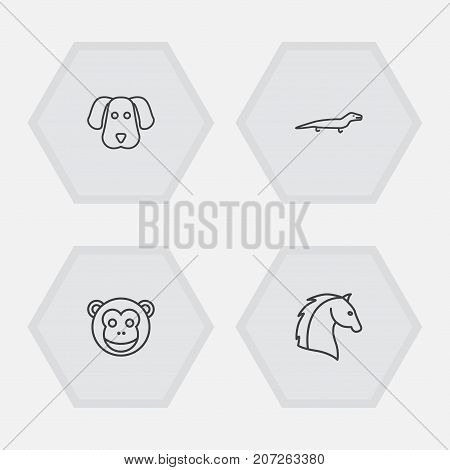 Collection Of Horse, Monkey, Lizard And Other Elements.  Set Of 4 Zoo Outline Icons Set.
