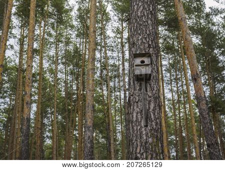 Lonely wooden nest box located on a pine-tree in autumnal forest
