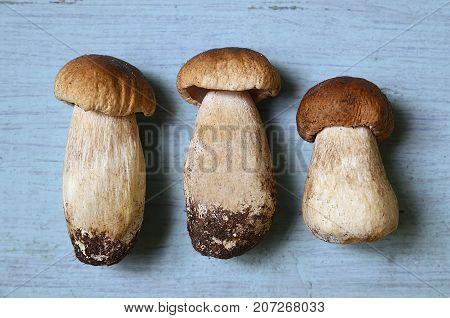 Boletus edulis mushrooms on blue wooden background.Autumn Cep Mushrooms.Cooking delicious organic mushrooms.Gourmet food.Selective focus.