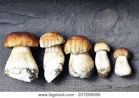 Boletus edulis mushrooms on old wooden background.Autumn Cep Mushrooms.Porcini mushrooms.White mushrooms.Selective focus.