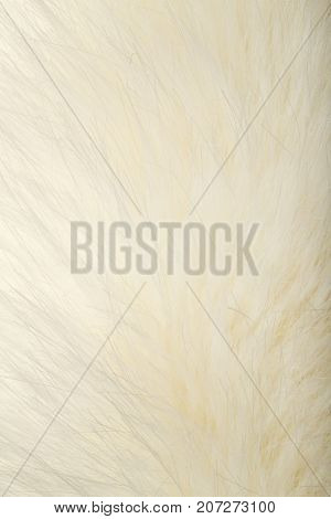 background of white fur . Photo of abstract background